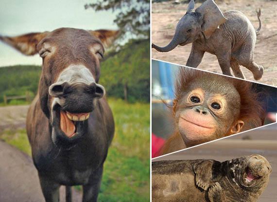 动物会笑吗?30张照片展现动物迷人笑容