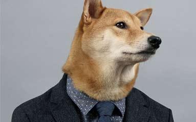 纽约宠物狗穿男装造型走红