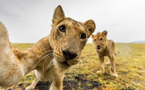 摄非洲野生动物