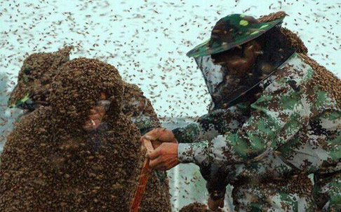 男子挑战百万蜜蜂蛰身