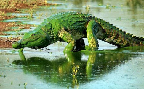 鳄鱼折纸步骤图解