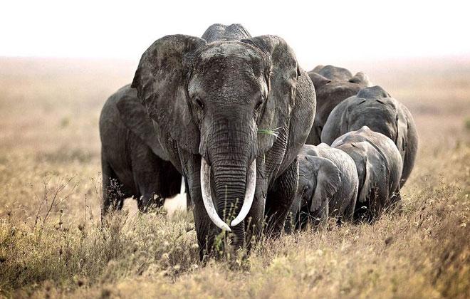 英摄影师记录非洲野生动物生存态