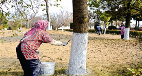 园艺人员开展冬季树木防寒养护工作