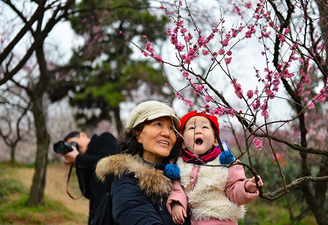 2017南京國際梅花節在寧開幕