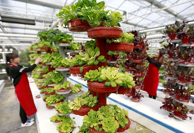 淮安:建設現代農業園 推動農業産業升級
