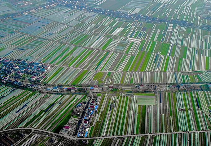 大地樂章  航拍南京八卦洲萬畝蘆蒿種植基地