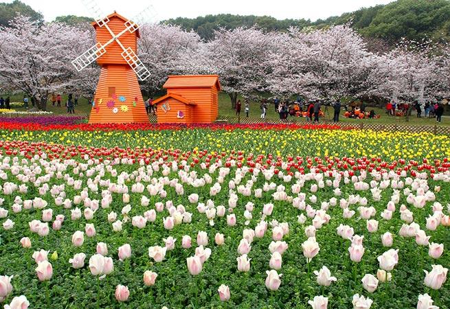 陽春三月花爛漫