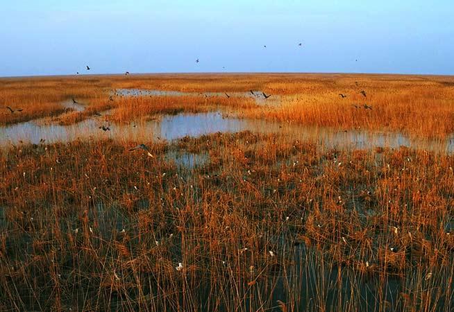 俯瞰鹽城自然保護區一隅 似蒲公英漫天飛舞