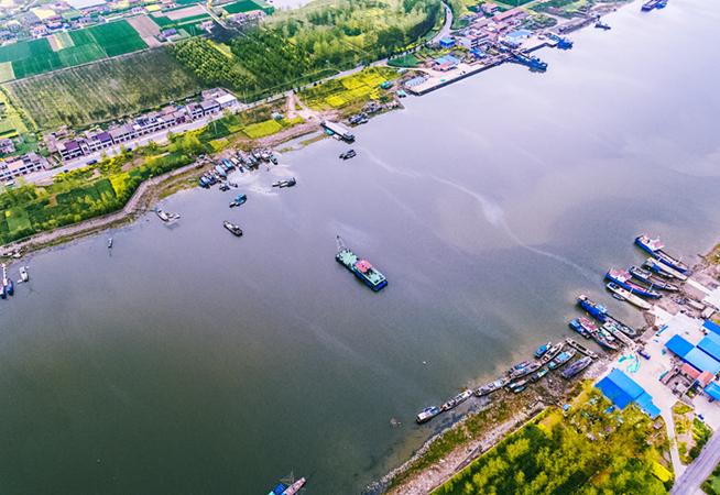 俯瞰鹽城新洋港入海口 蘆葦漸綠黃花遍地