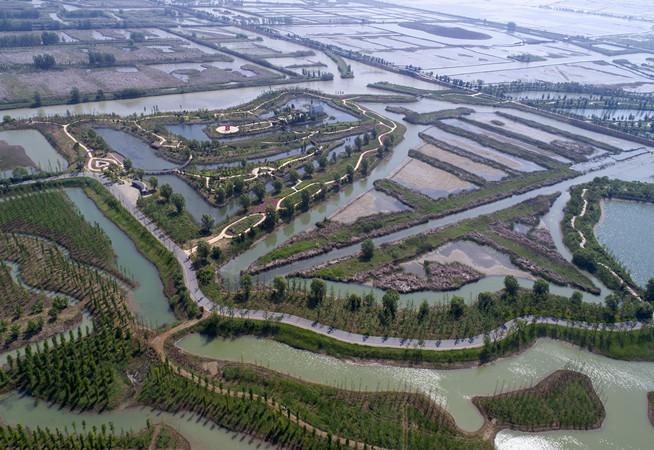 江蘇泗洪:濕地公園如迷宮