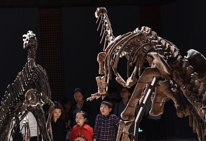 南京博物院夜遊活動迎來眾多市民