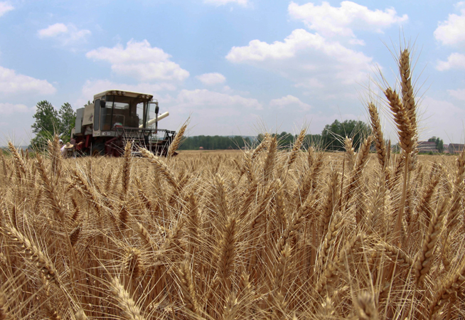 江蘇小麥開鐮收割