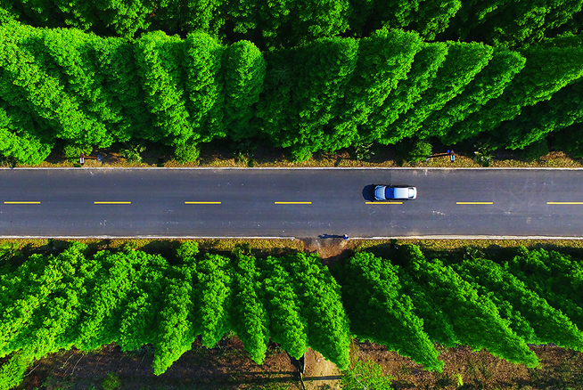 航拍鹽城東臺黃海森林公園 綠樹成蔭生機盎然