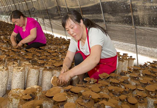 江蘇海安:生態種植富農家