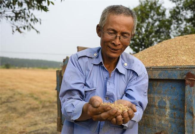 江蘇家庭農場主:今年夏糧價格高于去年
