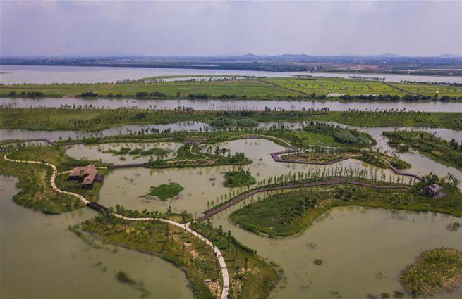 江苏句容:退渔还湖 修复湿地