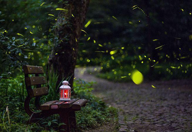 嘘!看那盛夏的萤火虫好似落入凡间的星星