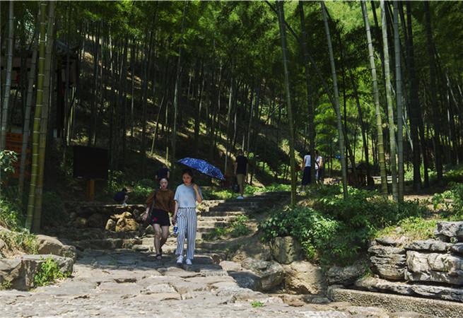 江苏宜兴:万顷竹海引游客