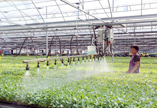江蘇東臺:生態種植助力農民增收