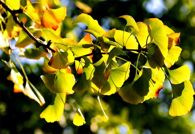 """色彩最丰富的季节来了! 总有一款""""秋色""""打动你"""