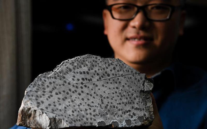 古生物学家揭秘最古老树木如何生长