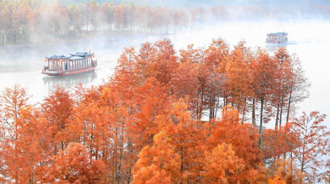 美丽中国丨水上森林画中游