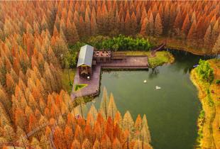 無人機之旅|航拍黃海森林公園 紅杉環繞心形小池
