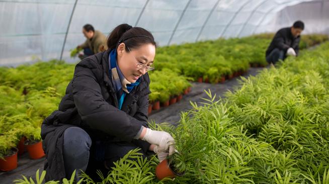 江苏宿迁:智能种植促农增收