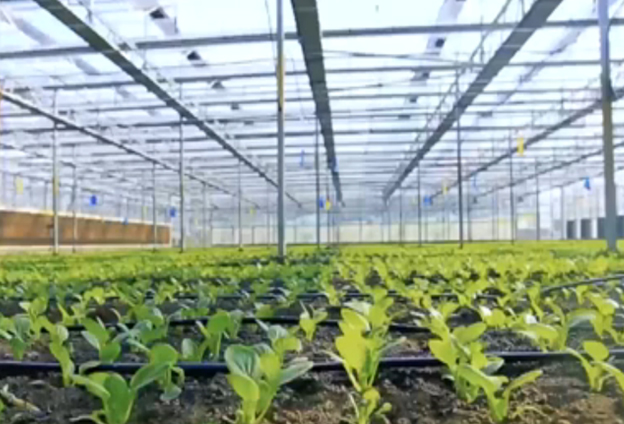 龍頭企業運作+能人大戶,充分帶動農業産業結構的調整。
