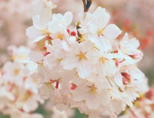 美圖丨亂花漸欲迷人眼 這些春花到底誰是誰?