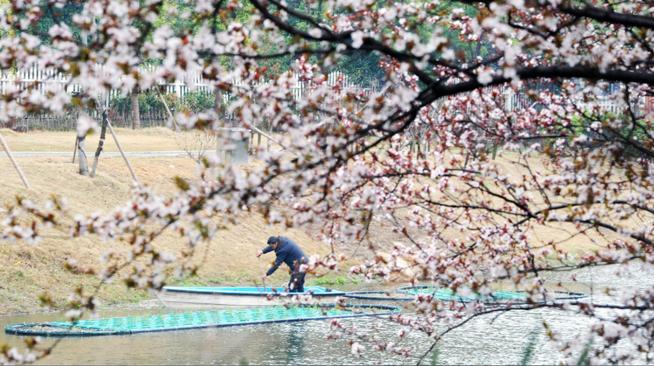 江蘇揚州:綠化河道忙