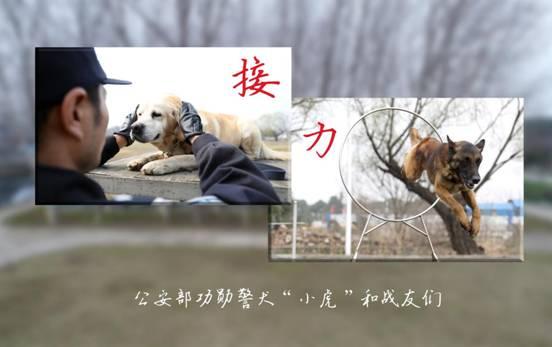 """接力—— 公安部功勋警犬""""小虎""""和战友们"""