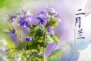 """四季的味道之春天的味道:草熏风暖 最美""""和平紫"""""""