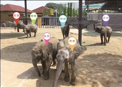 6只非洲象都有了名字