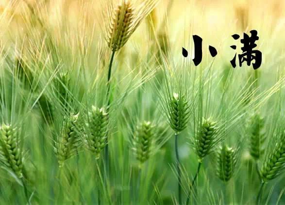 小滿美文丨麥穗初齊稚子嬌,桑葉正肥蠶食飽