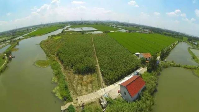 治污湿地成公园 苏州全域推进农村生活污水治理