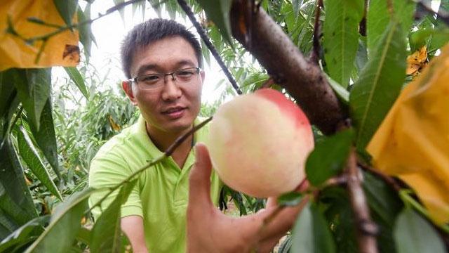 """江苏阳山:""""罗大圣""""和他的甜蜜事业"""