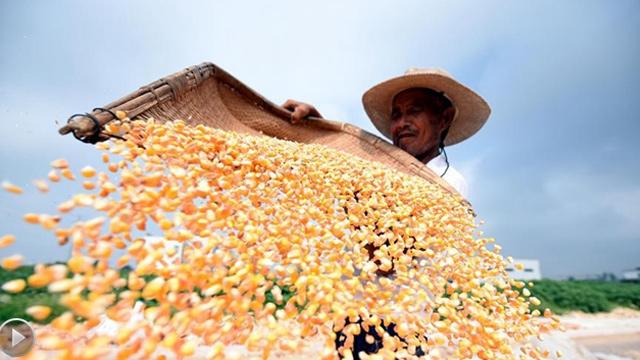 丰收,澳洲幸运10有开奖记录九月的味道