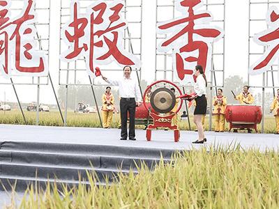 """虾稻共生带动农民增收6.8亿元 江苏盱眙33.9万亩""""龙虾香米""""集中开镰"""