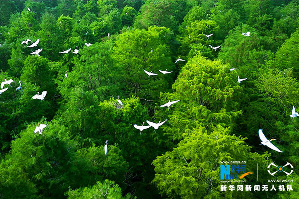 新華網航拍:長江經濟帶之江蘇篇