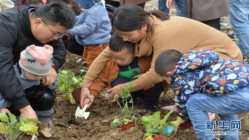 南京:種植紫金草 共建和平花圃