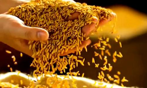 優質優價,中國好糧油項目讓種糧大戶一年增收幾十萬元