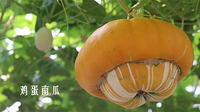 """1520種新品蔬菜描繪未來""""菜籃子"""""""
