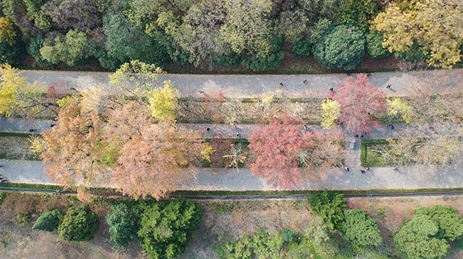 """金陵初冬 想帶你看""""南京最美的600米"""""""