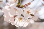 春季裏來報花名!這些花兒你都賞過了嗎?