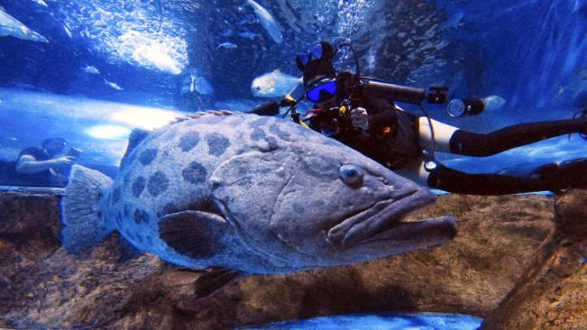 """換個姿勢過端午!打卡海底世界""""深藍色""""的夏天"""