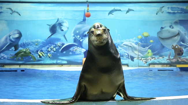 """南京海底世界""""拍了拍""""你一起遇見動物明星"""