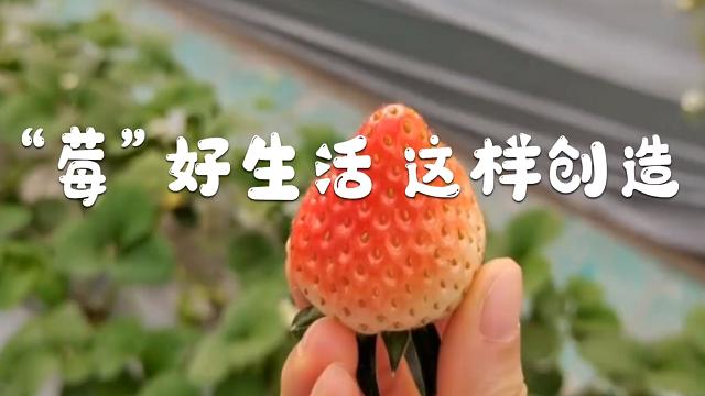 """""""莓""""好生活 這樣創造"""