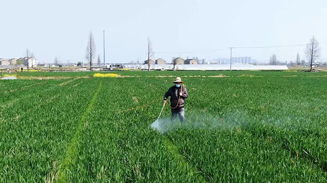 人勤春來早 科技助農耕