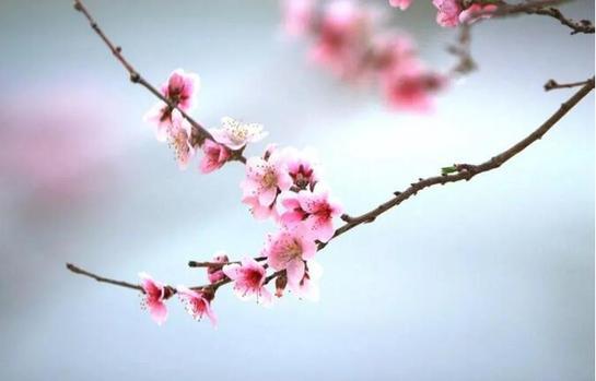 今日驚蟄丨在春光裏追夢,在徵途上奔跑